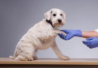 """""""Karvan verran parempaa työelämää"""" – eläintenhoitoalan Teams-tapaaminen"""